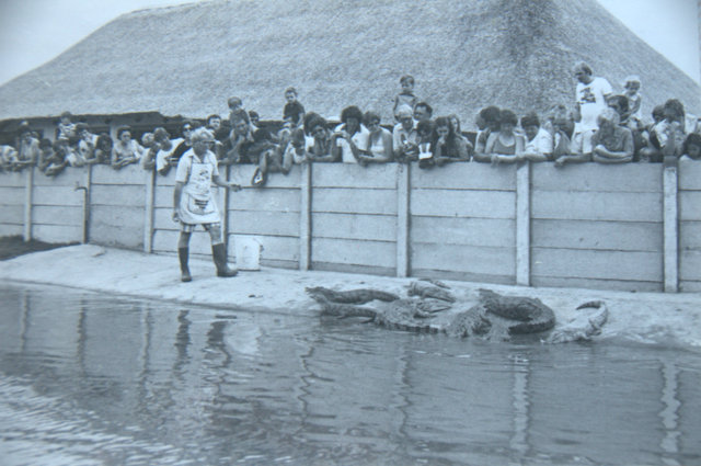 History of Riverbend Crocodile Farm