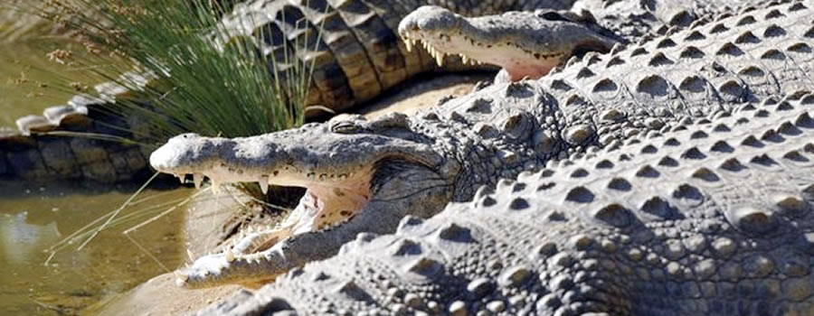 Riverbend Crocodile Farm, Southbroom KZN